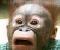 HS-JigSaw-Puzzle-Monkey